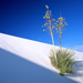 White sands blue